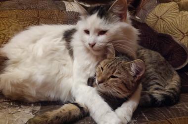 50 котов просят о помощи: нужны сухие корма