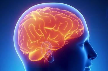 Ученые выяснили, как праздники влияют на человеческий мозг