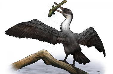 В Арктике нашли зубастую птицу