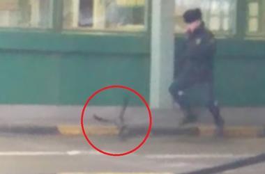 Ворона, укравшая паспорт на российской границе, стала звездой YouTube