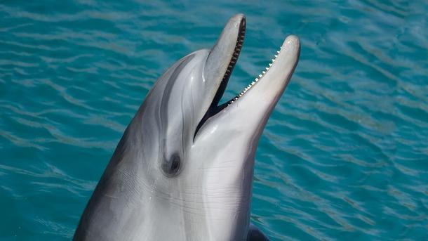 ВЯпонии неизвестный освободил избассейна четырех дельфинов