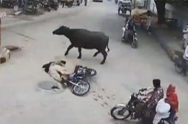 В Пакистане бык атаковал мотоциклиста