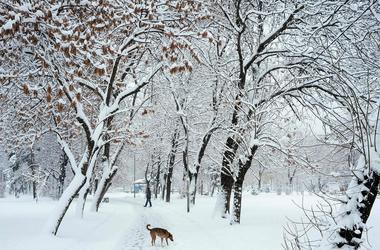 Погода на завтра: в Украине потеплеет, но снег не закончится