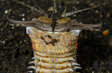 Атака трехметрового червя: самый жуткий подводный хищник