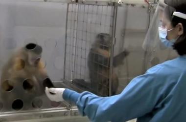 Интересный эксперимент: чувство справедливости у обезьян