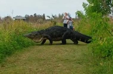 Un gigantesco cocodrilo en el parque natural de conmocionó a los usuarios de Facebook