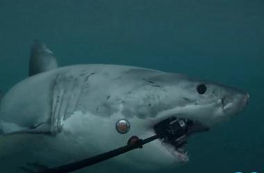 Акула за несколько секунд уничтожила камеру для подводной съемки