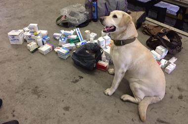 """На пункте пропуска """"Ягодин"""" служебный пес нашел сумку с наркотиками"""