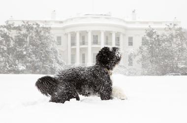 Белый дом останется без домашних животных впервые за 150 лет