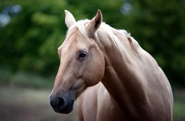 Во Львовской области лошадь убила мужчину