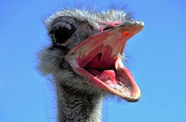 Из купленного в интернете яйца женщина вырастила страуса