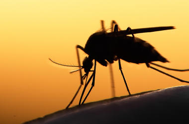 В Запорожье два украинца заболели тропической малярией