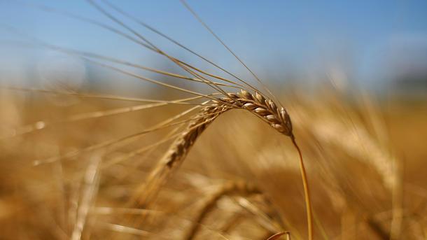 Украина попала в мировой список потенциальных продовольственных доноров
