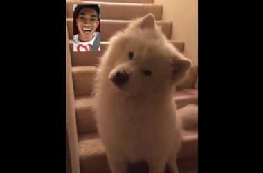 Hunden pludselig reagerede på en video-opkald fra ejeren og blev en stjerne af det sociale netværk