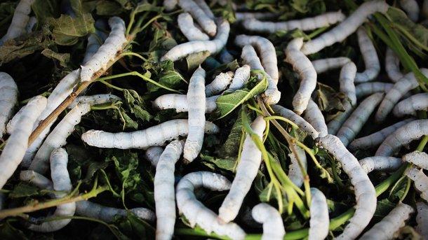 ВИндии умужчины достали изжелудка двухметрового червя