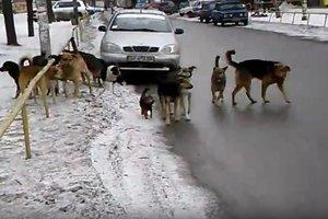 Запорожцы жалуются в соцсетях на стаи бродячих собак