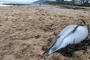 Любители селфи снова убили дельфина