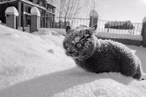 В воскресенье в Украину придут 20-градусные морозы