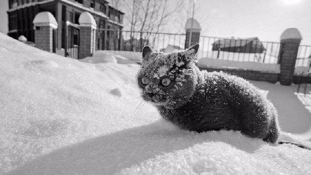 Погода вИжевске: сначалом февраля вгороде потеплеет ивыпадет снег