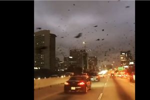 """""""Апокалипсис"""" в США: очевидцы сняли нашествие птиц на город"""