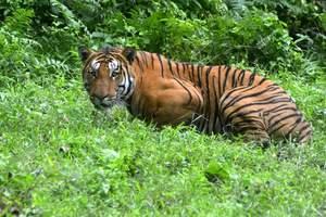 В Китае тигр растерзал посетителя зоопарка (+18)