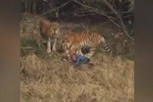 В китайском зоопарке тигр съел туриста, залезшего к нему в вольер