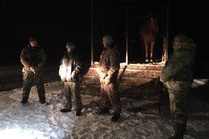 На Волыни пограничники задержали банду конокрадов