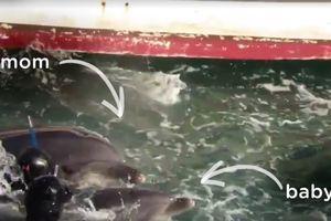 Душераздирающее видео: мать пытается спасти малыша от ловцов дельфинов