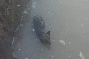 Пес, который 3 дня простоял в ледяной воде, ищет новый дом