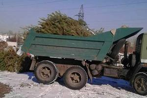 Переработка новогодних елок в Киеве: горожане приносят игрушки, дождик и искусственные деревья