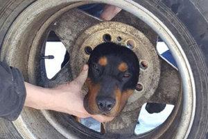 Пожарные спасли щенка, застрявшего головой в колесе