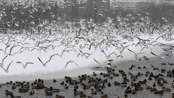 Погода в иркутске на 30 дня самый точный прогноз