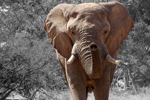 Голодные слоны захватили деревню в Китае