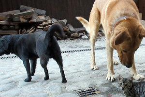 В Киеве за шесть лет стало в семь раз меньше дворняжек
