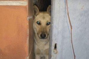 В Киеве ради спасения собачки разобрали сарай