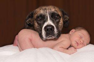 Нервозность собаки зависит от поведения хозяина - ученые
