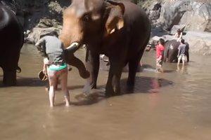 Слон атаковал туристку, которая подошла к животному слишком близко