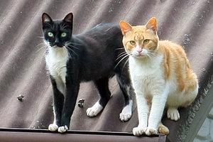 В Киевраде рассмотрят петицию о признании котов частью экосистемы города