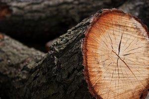 На Волыни мужчину убило дерево