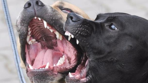 Соседские собаки насмерть загрызли пенсионерку под Винницей