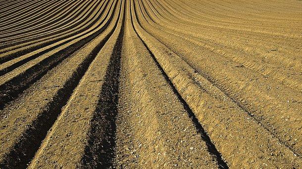 На посевную в Украине будут семена. Фото: Pixabay