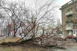 В Одессе дерево раскололось и упало на проезжую часть