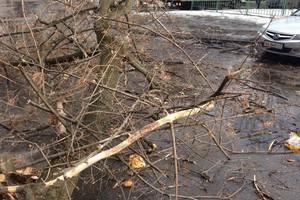 В Киеве дерево рухнуло на машину