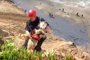 Touching video: in the US rescued a dog from falling off a cliff
