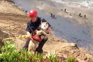 Toccante video: negli stati UNITI hanno salvato un cane da una caduta da un dirupo