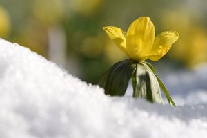 Синоптики рассказали, каким будет последний день зимы в Украине