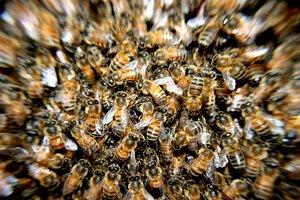 В США 11-летний мальчик выжил после 400 укусов пчел