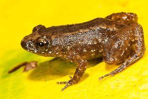 Лягушки и жабы различают цвета в темноте – ученые