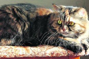 Бюро находок: одесситы теряют котов, квадрокоптеры и дорогой алкоголь