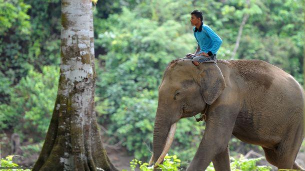 Биологи обнаружили, что слоны высыпаются задва часа